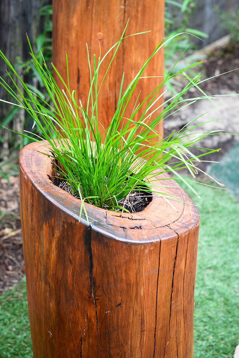 Play space design feature plant