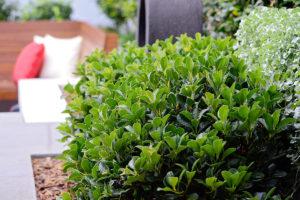 Courtyard landscape design plantings