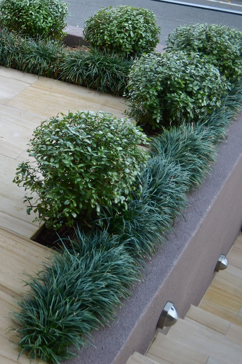 Courtyard landscape design plantings