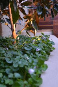 Courtyard landscape design garden bed