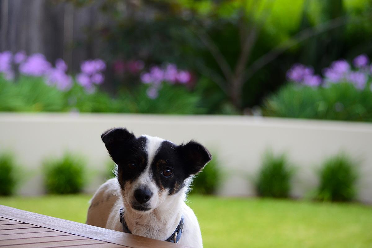 Family garden landscape design family dog