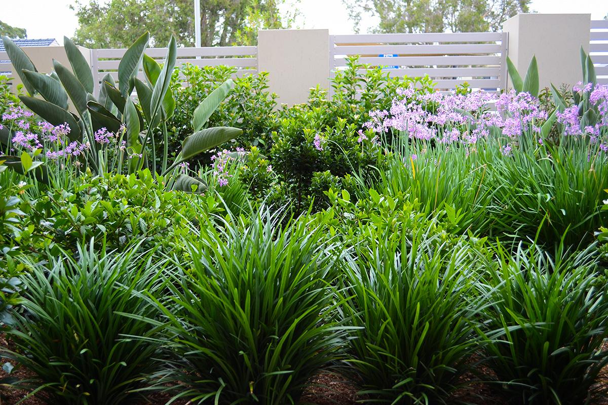 Family garden landscape design plantings