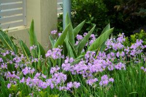Family garden landscape design flowers