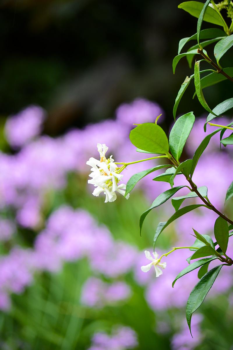 Family garden landscape design flower