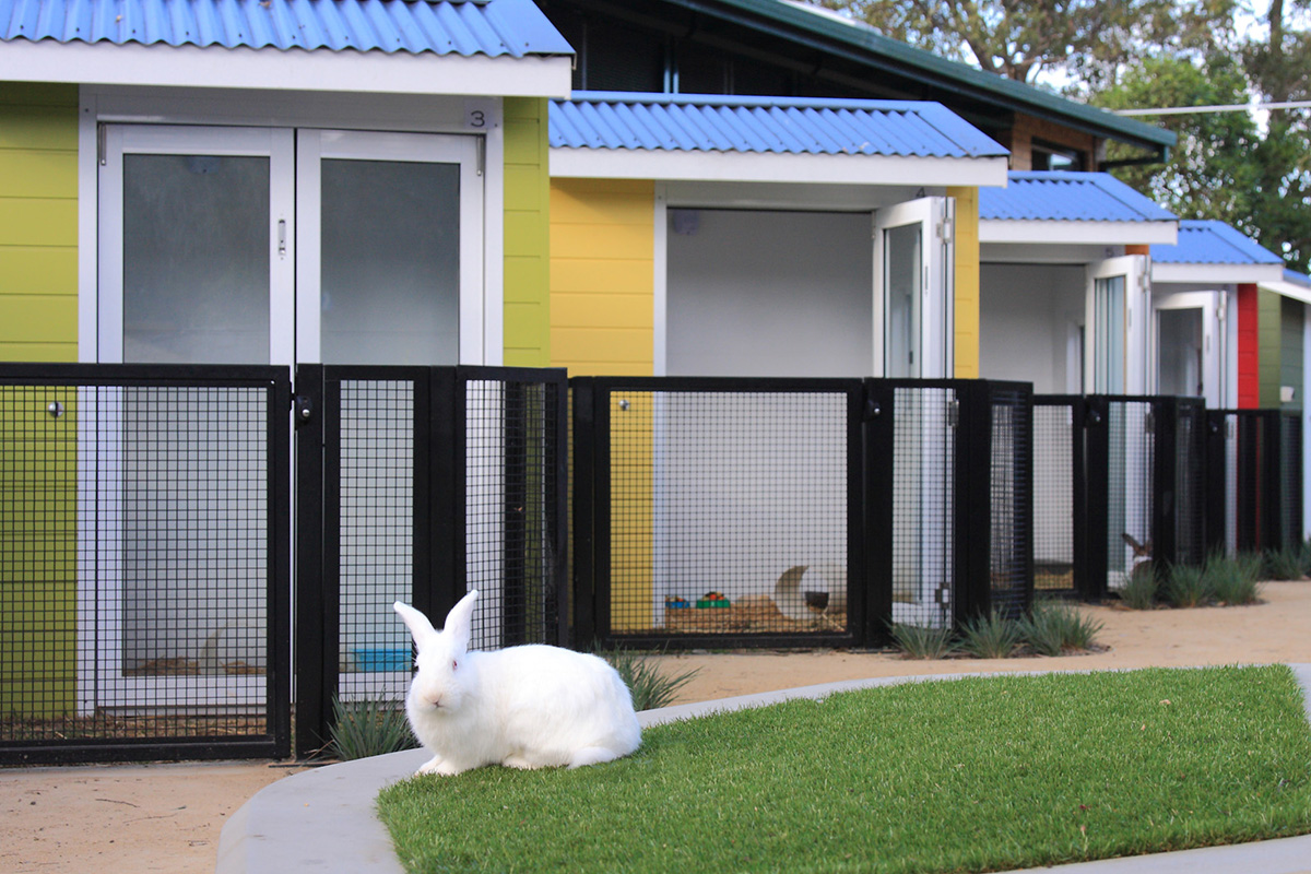 Lanscape architecture pocket pet houses and bunny