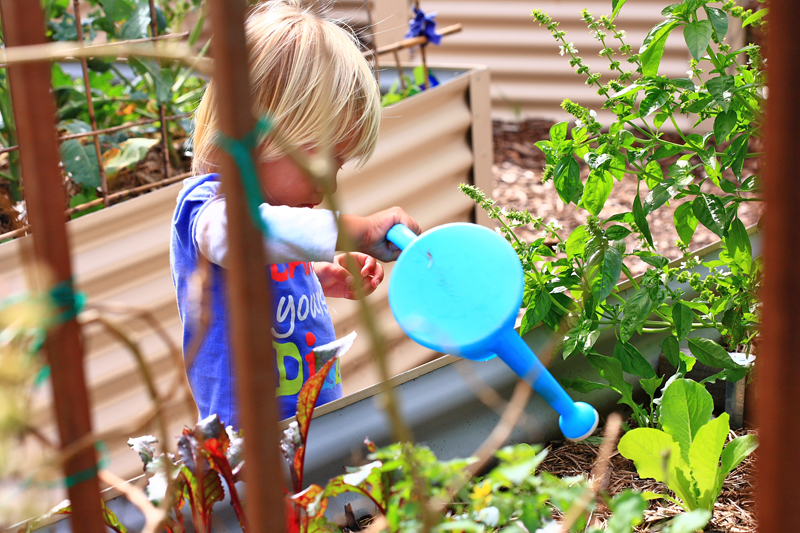 Child watering the gardens