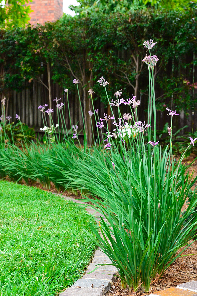 Backyard landscape design flower plantings