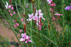 Backyard landscape design flowers