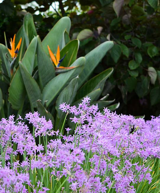Image of purple flowers and bird of paradise flower