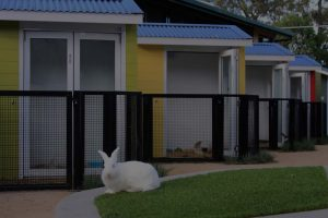 Image of rabbit and pet enclosures