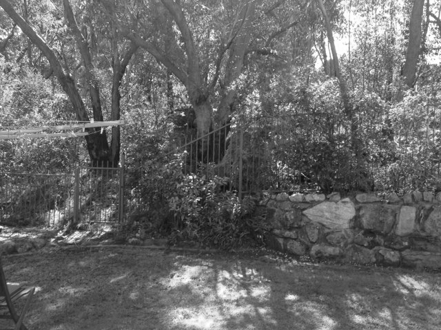 Garden before renovation