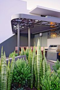 Sculptural planting, screens any negative views and provides privacy