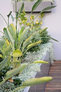Bird of Paradise and silver falls cascading over the edge of the bespoke raised planter beds