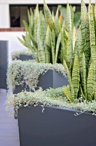 Raised planters with cascading plants