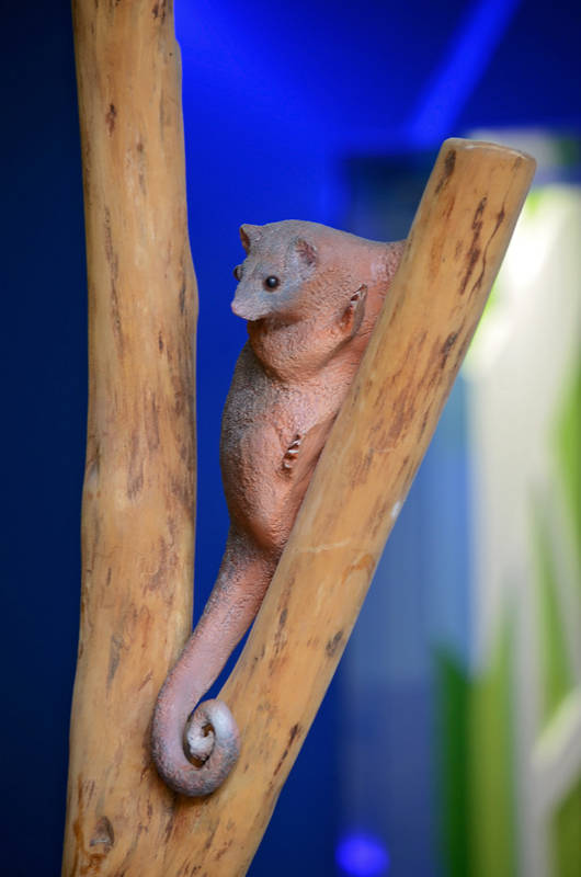 Timber carved possum