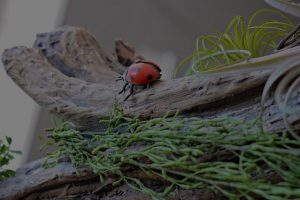 Natural timber play element with lady bug