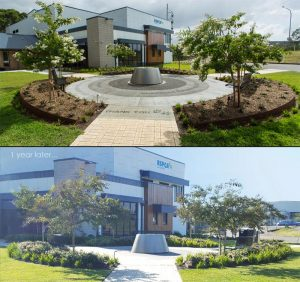 Mature planting comparision photo for head office front garden