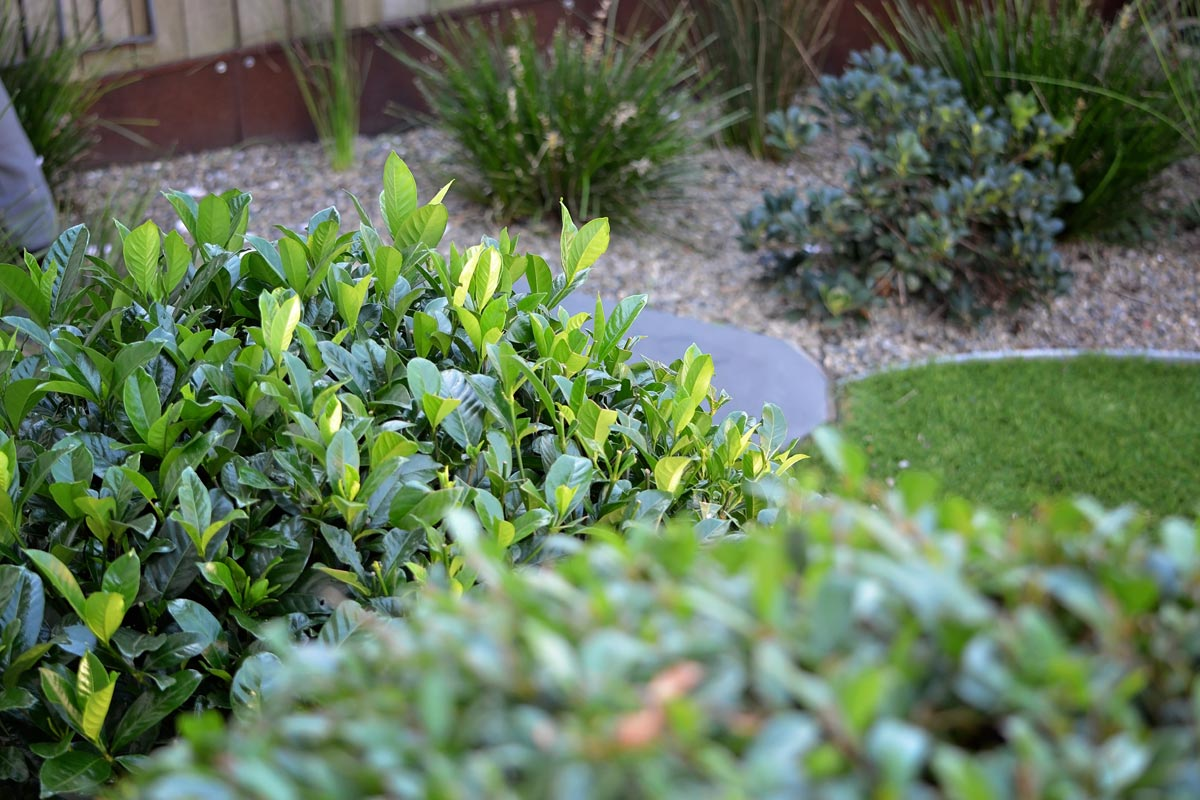 Rounded shrubs