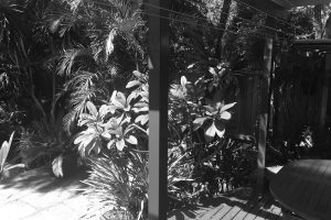 Before image from back deck