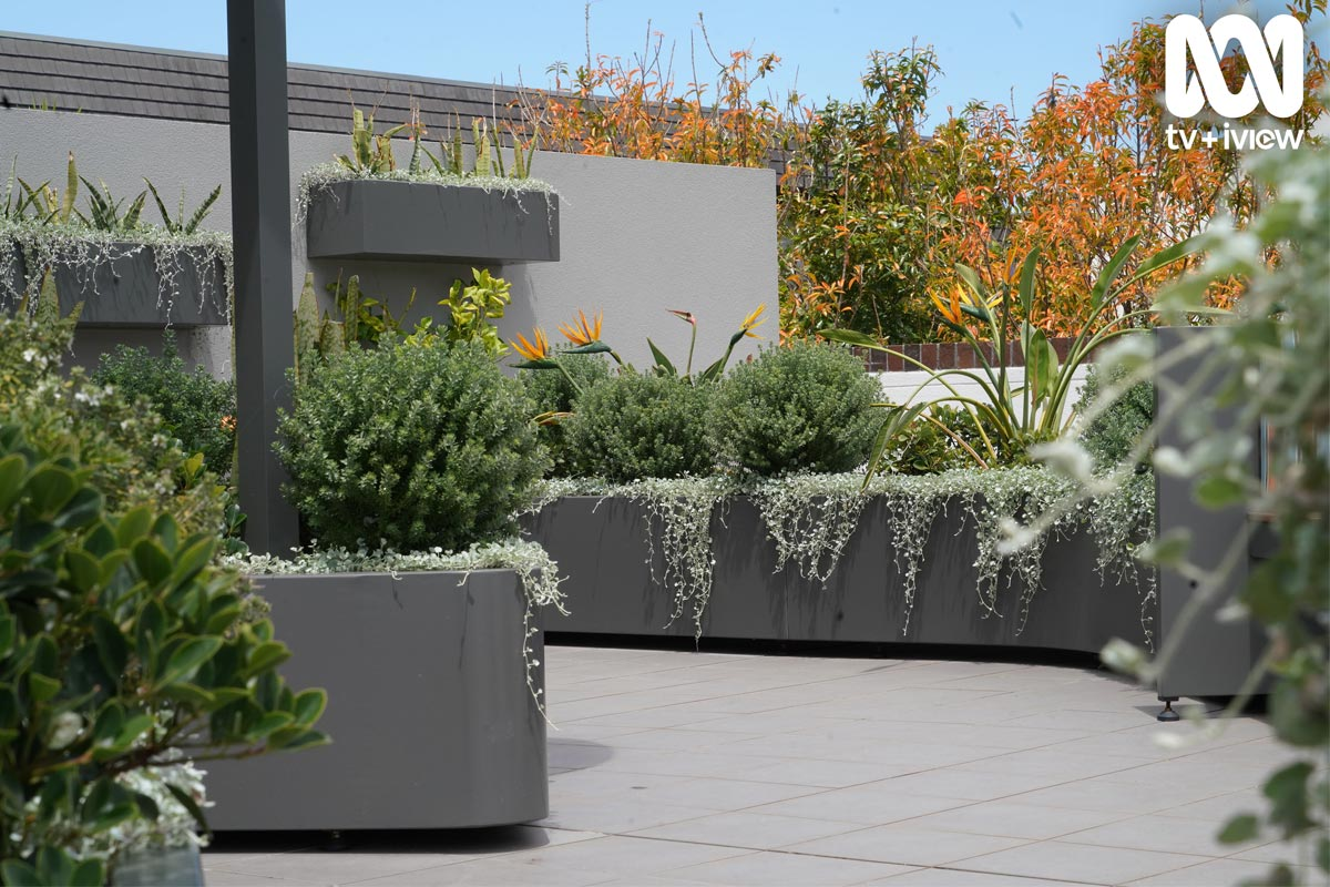 Close up Erskineville rooftop garden from Dream Gardens