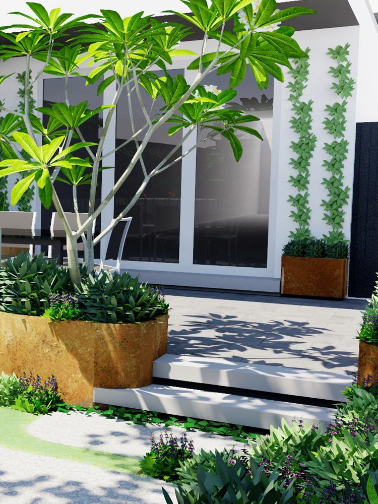 View of feature curved corten planting edge and feature planter with striking frangipani tree and wide steps