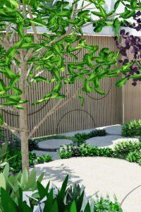 Canopy tree for shade